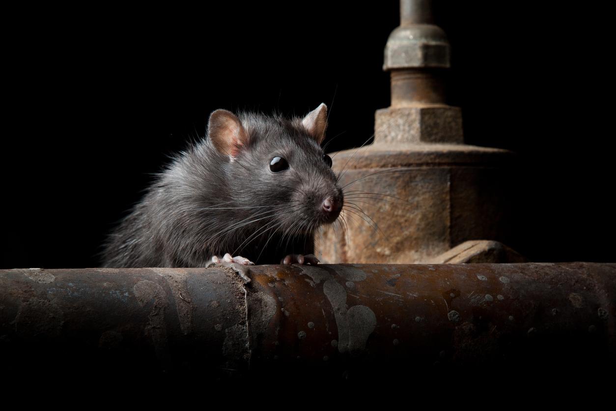 Hughes Exterminators Rodent Control In Florida