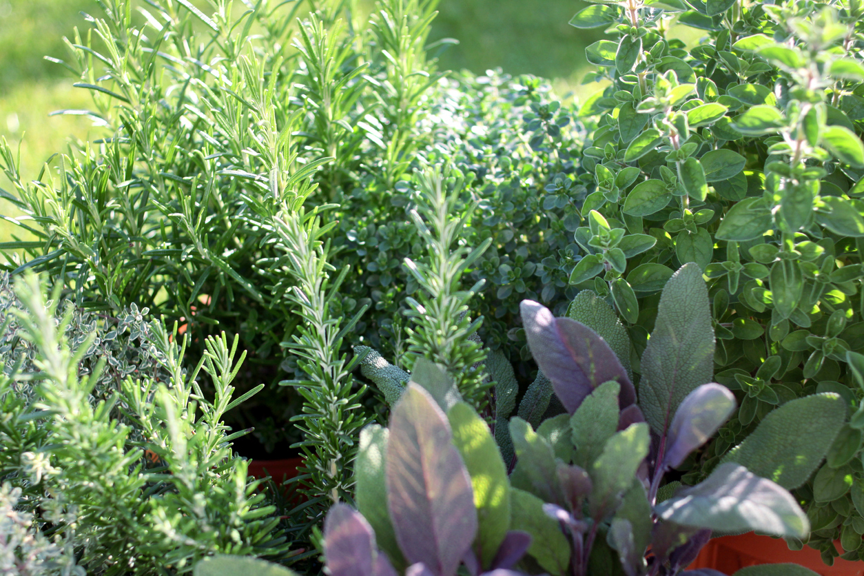 6 Herbs That Can Protect Your Spring and Summer Garden