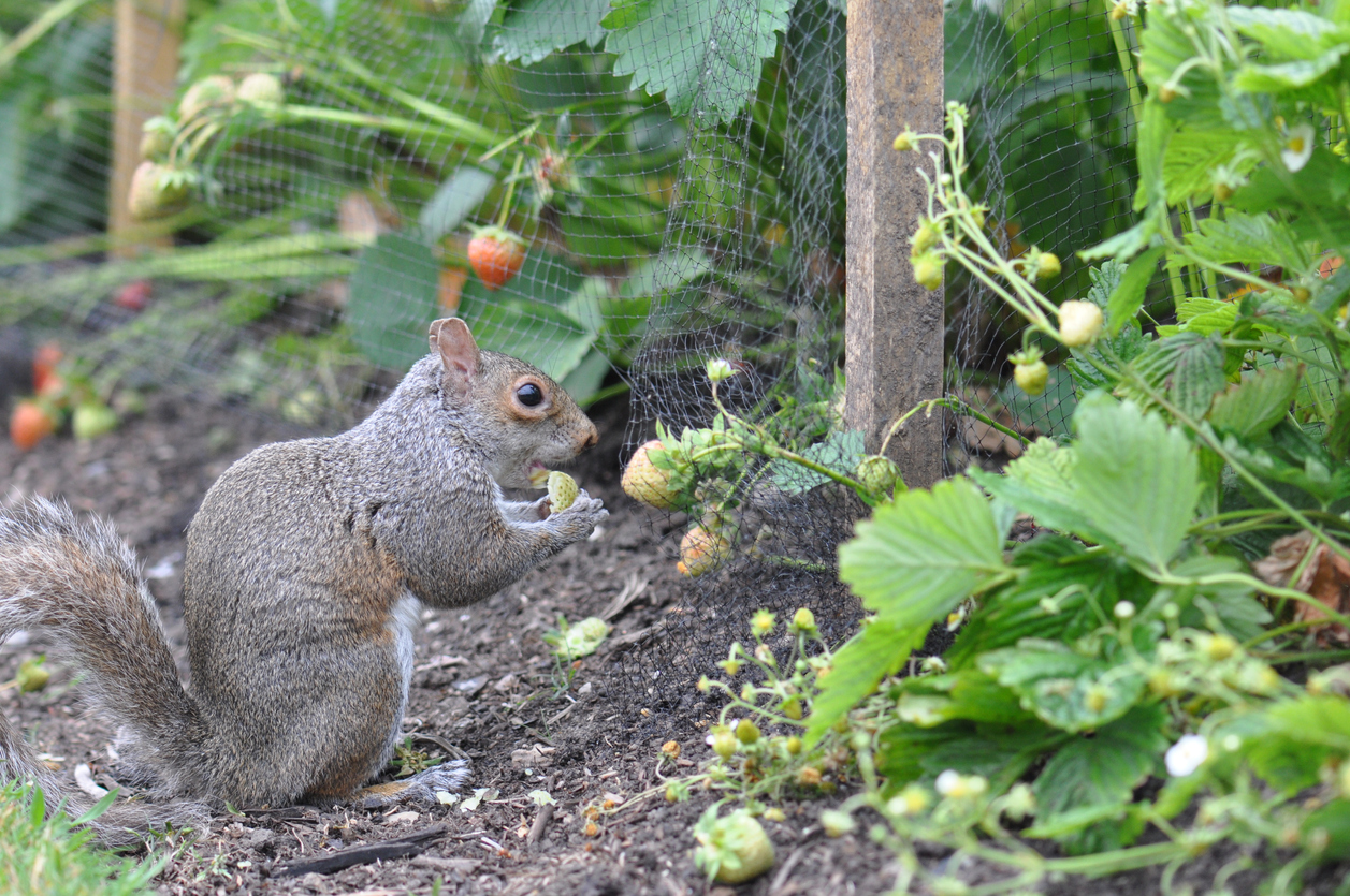 Furry Garden Pests to Watch Out For This Spring