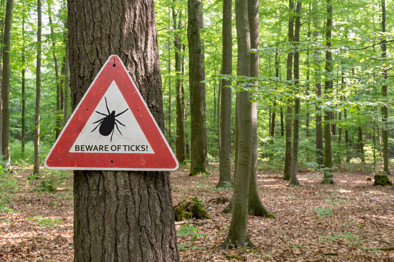 Steer Clear of Lyme Disease This Fall