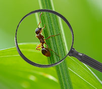 Find Facts About Pests in Our Pest Library